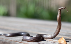 2017-09-10 10_02_39-Brown Snake · Free Stock Photo
