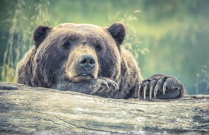 2018-07-01 06_38_25-167 Incredible Bear Pictures · Pexels · Free Stock Photos