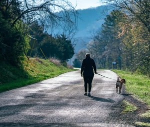 2019-03-13 22_03_15-Morning Walk photo by Fancycrave (@fancycrave) on Unsplash