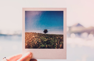 2019-08-29 19_17_52-Person Holding Photo of Single Tree at Daytime · Free Stock Photo